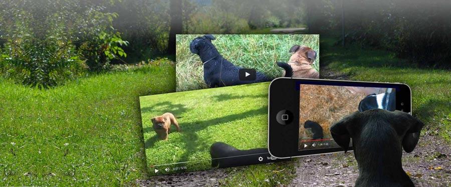 Hjemmeside slider grafisk - DogWhisperer.dk