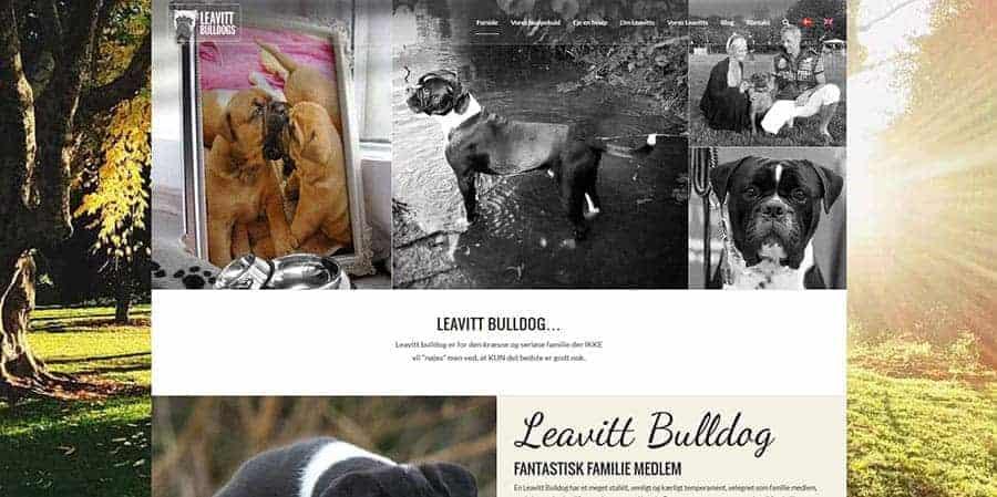 Snapshot af Leavitt Bulldog hjemmeside forside